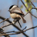 Parks teams up with Cornell for Project Feeder Watch