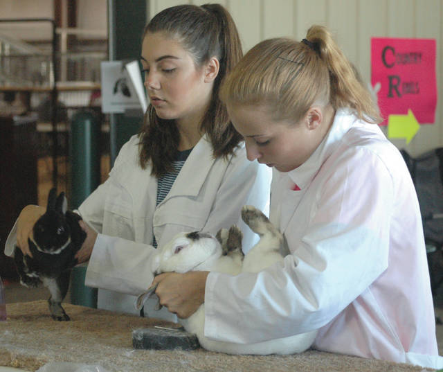Scott Halasz | Greene County News Fairborn Junior Farmer members Makayla Kernich (left) and Samantha Horning (right) do some last-minute grooming prior to the breeding rabbit show July 31.