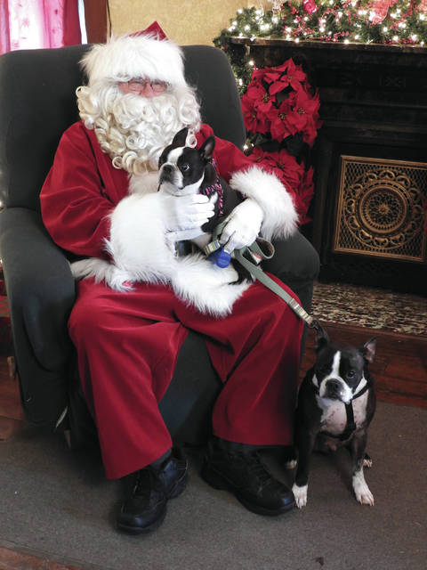 Submitted photos Two Boston Terriers strike a pose with their favorite holiday man in red.