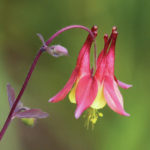 Pre-orders available now for native plant sale