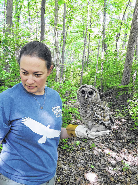 Submitted photos Glen Helen Raptor Center Director Rebecca Jaramillo helped the baby owl with rehabilitation after its injury and reuniting with its parents.