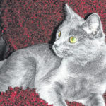 Cat of the week: Madison