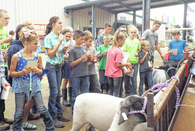 Participants rank four sheep based on quality for the first part of General Livestock Judging.