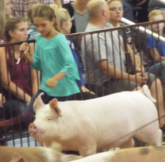 Natalie Jones   Greene County News Lola Smith trying to keep her hog away from the fence. Smith won fifth in her class.